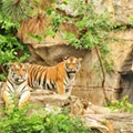 Saint Louis Zoo in the Running to Be Named Best in the U.S.