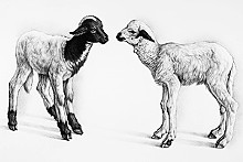 CLAUDIO BRAVO - A lithograph from A Bestiary.