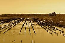 KEEGAN HAMILTON - A new casino could disturb these wetlands.