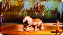 CAVALIA.NET - Humans populate Cavalia, but horses take center stage.