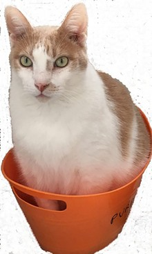 371cc986_frankie_in_bucket.jpg