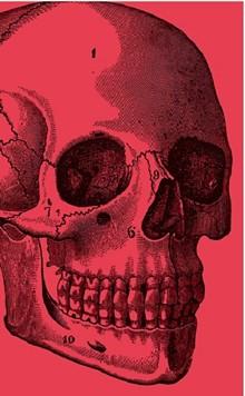 8fa7d4a3_death_skull.jpg