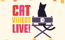 catvid_live.jpg