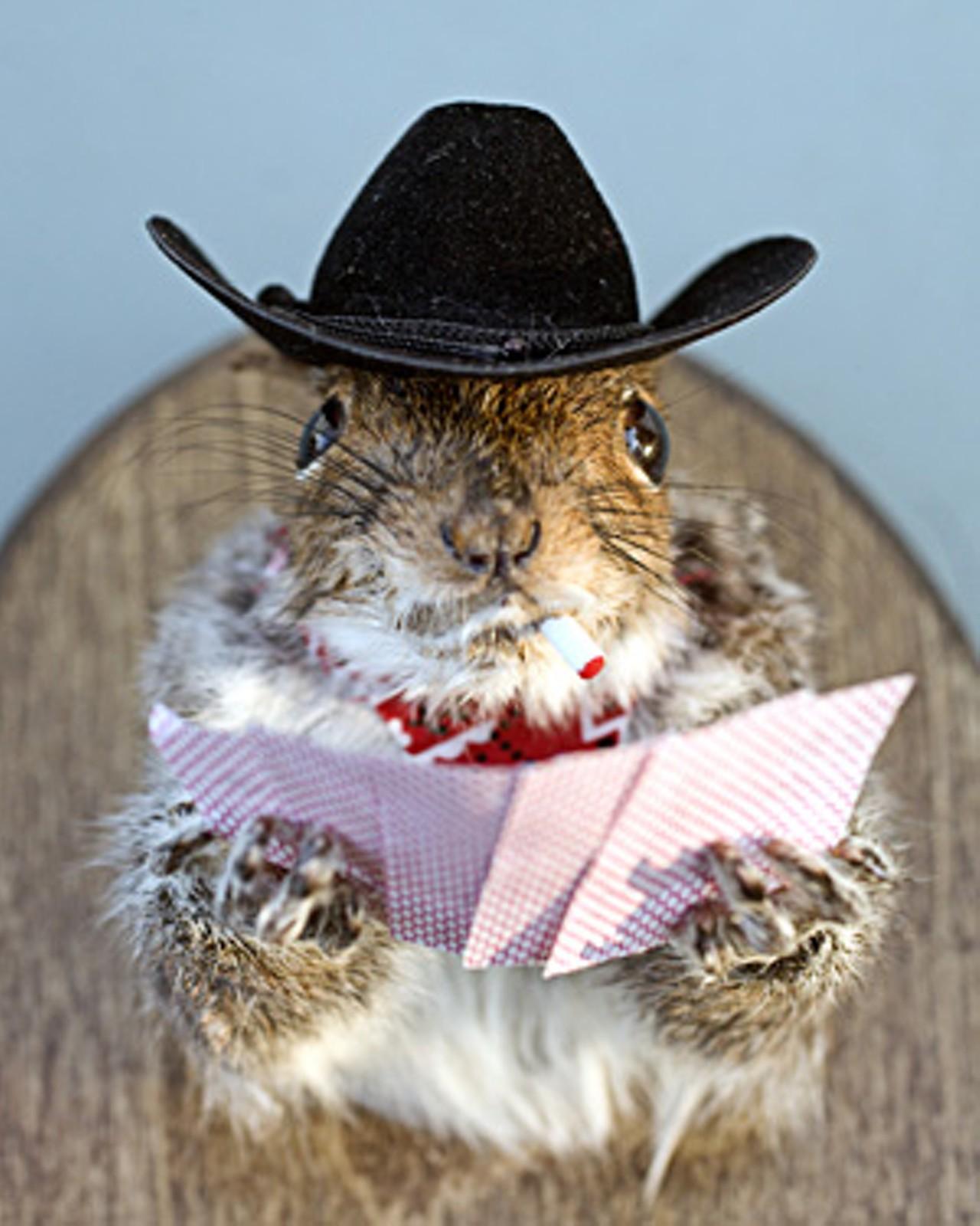 Mount My Squirrel Local Taxidermist Rick Nadeau Has A Lot