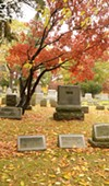 A Japanese maple tree in Mount Hope Cemetery.