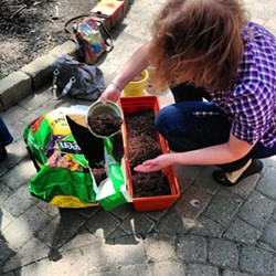 "A student taking the ""Container and Urban Organic Gardening"" class at Rochester Brainery. - PHOTO PROVIDED"