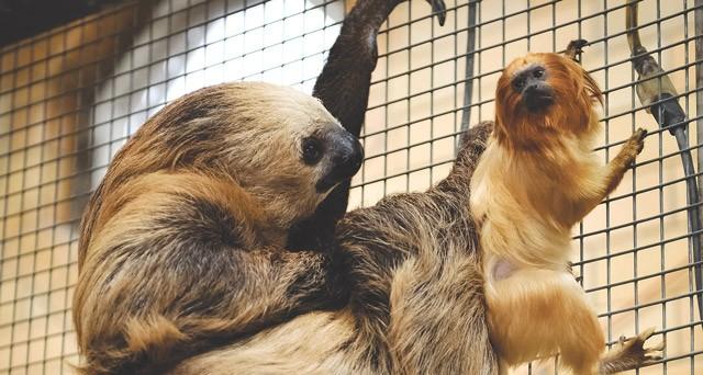 Animals hang out at Seneca Park Zoo.