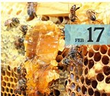 3a7dbb3c_beekeepig.jpg