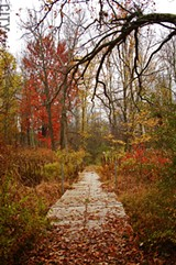 Black Creek Park covers 1500 acres in the southwest corner of Chili. - FILE PHOTO