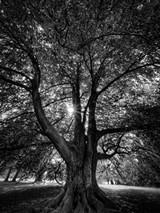29f6dd83_camera_rochester_image.jpg
