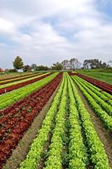 e7c92993_vegetable_garden.jpg