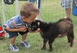74153a5f_goat.petting.zoo_smaller.jpg
