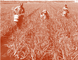 6f4ce452_harvesting_justice_promo_pic.png