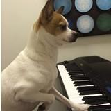 cee0e07c_hectoe_piano.jpg