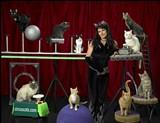 77175246_cat_troupe_new.jpg