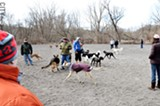 The Ellison Dog Park in Penfield is one of two official dog parks in the area, giving dogs (and their owners) a place to socialize off-leash. - PHOTO BY MATT DETURCK