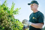 PHOTO BY MARK CHAMBERLIN - The pruning and caring of Highland Park's greenery is physically demanding and time-intensive work, says Monroe County horticulturist Tom Pollock.