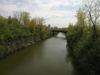 Canal tree plan meets growing resistance