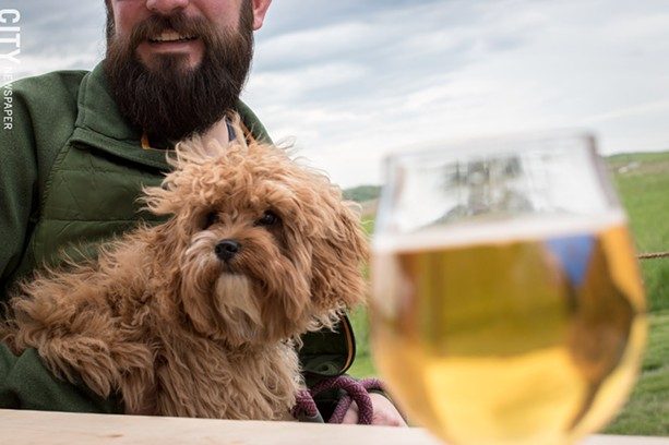 A sweet pupper enjoys a cold one on the patio at Other Half Brewing in Bloomfield. - FILE PHOTO