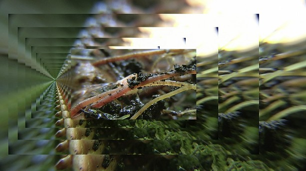 "A still from Anna Scime's video artwork, ""Understory,"" which is part of the ""Earthen"" exhibit at Rochester Contemporary. - PHOTO PROVIDED"