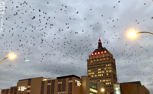 A murder of crows flies over downtown Rochester in January 2020. - PHOTO BY DAVID ANDREATTA