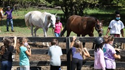 A Horse's Friend began with just a few horses and now has nearly two dozen, serving hundreds of riders year-round. - PHOTO CREDIT MAX SCHULTE / WXXI NEWS