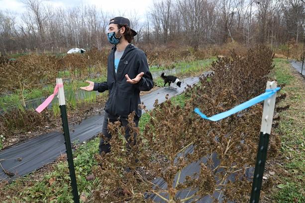 Zach Sarkis on his hemp farm in Spencerport. - PHOTO BY MAX SCHULTE