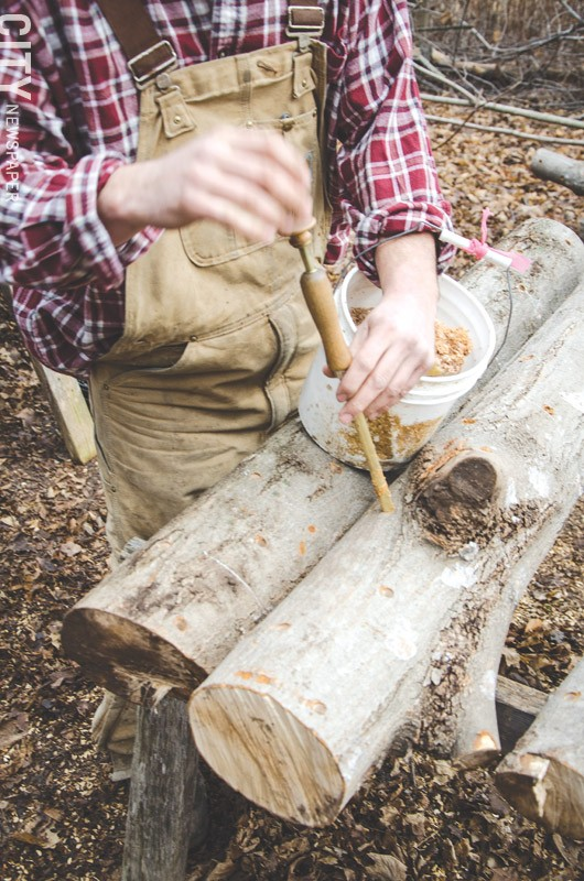 Noah and Abe inoculate the logs with a mushroom spawn and it will take about a year or longer before mushrooms can be harvested. - PHOTO BY MARK CHAMBERLIN