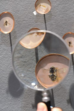 "Heather Green's ""Pinpoints of Perception,"" installed at Hartnett Gallery, includes dozens of life-sized paintings of bees as part of an ongoing project to document 1000 of the species native to the Sonora Desert. - PHOTO PROVIDED"