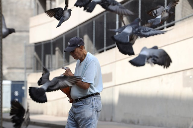 Michael Picow, 76, has been feeding the pigeons on Division Street in downtown Rochester almost daily for nearly 35 years.