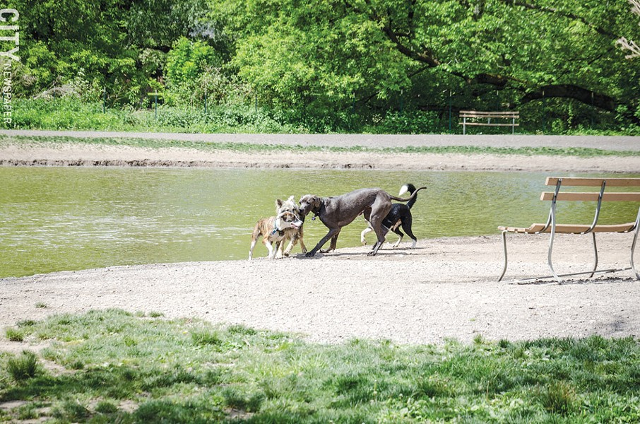 Dogs playing at the Ellison dog park. - PHOTO BY MARK CHAMBERLIN