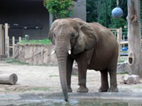 Seneca Park Zoo named a 'worst zoo for elephants' by animal advocacy group