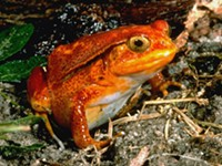 "RMSC's ""ribbiting"" new exhibit"