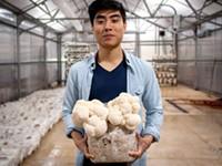 Leep Foods grows super 'shrooms