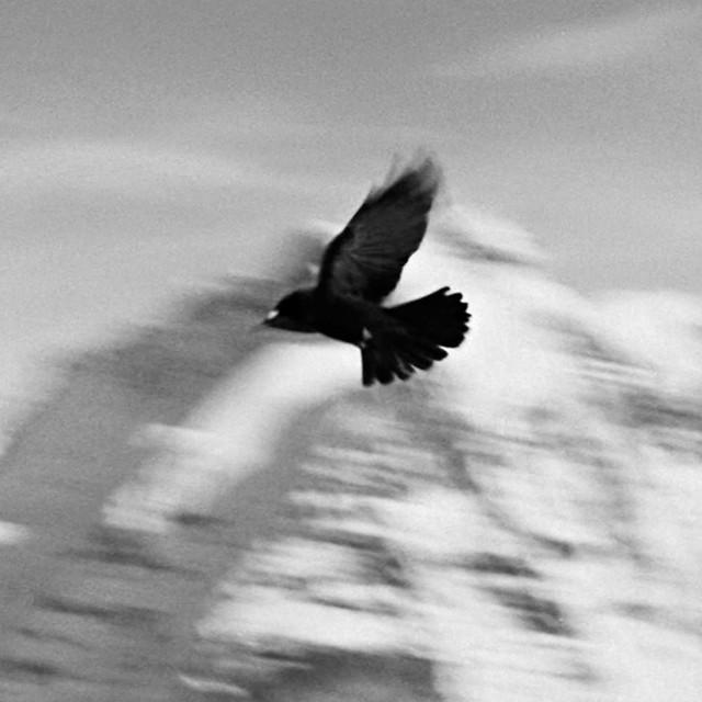 Taryn Simon: Birds of the West Indies
