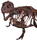 "Tyrannosaurus rex ""Sue"" - Uploaded by Michael R Grenier"