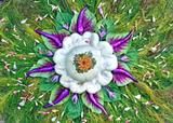 compressed_image.png