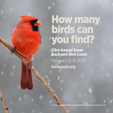 Great Backyard Bird Count - Uploaded by Helmer Nature Center