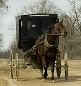 mennonite-buggy-by-alan-walker-283x300.jpg