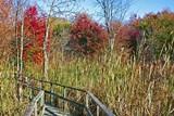 a6f35c6f_thousand_acre_swamp.jpg