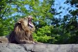 f7db6622_lion-2014-1-pamela-reed-sanchez-_chester_.jpg
