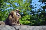 6f2aa25d_lion-2014-1-pamela-reed-sanchez-_chester_.jpg