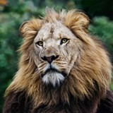 43f92c65_lion-2015-cathy-stolz-e1461549759211.jpg