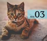 b74409e3_aug3_cat_2048x2048.jpg
