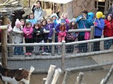 2b620a62_bunk-with-beasts-girl-scouts.jpg