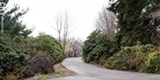PHOTO BY RYAN WILLIAMSON - A trail winds uphill through rhododendron in Highland Park.