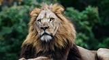 a0d7c3ce_lion-2015-cathy-stolz-1.jpg