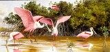 "PHOTO PROVIDED - Detail of Arthur Singer's mid-1990's oil painting, "" Roseate Spoonbills at Ding Darling,"" on view at University Gallery as part of ""Arthur Singer: The Wildlife Art of an American Master."""