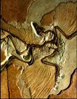 475947a0_archeopteryx.jpg