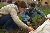 PHOTO BY KURT BROWNELL - Urban harvest: sowing the seeds at Fresh Produce Buying Club.